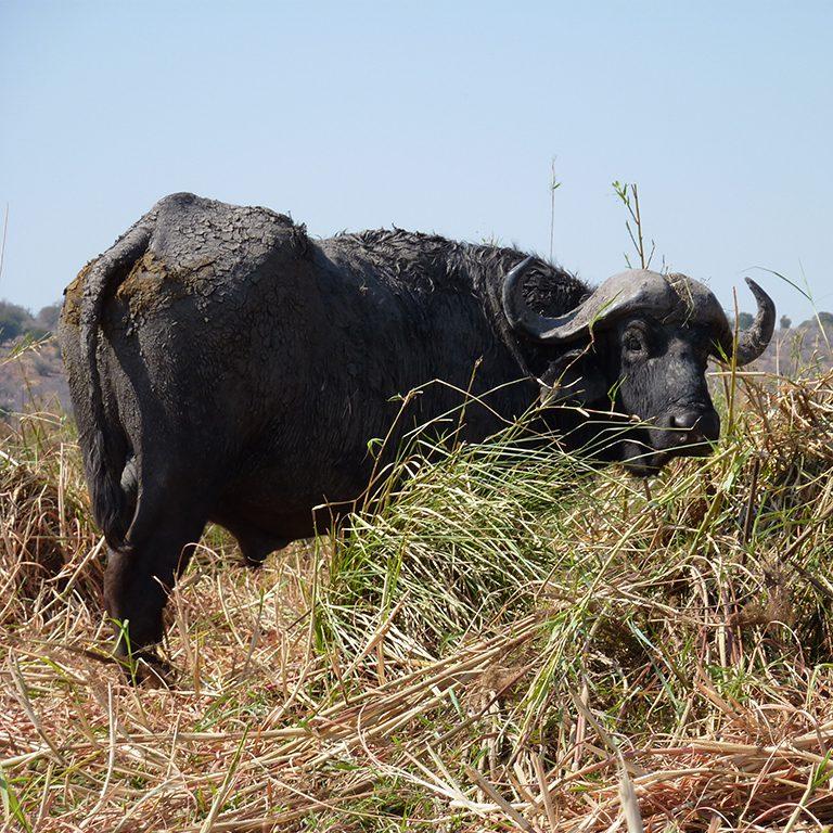 3-Mikumi-National-Park-the-small-Serengeti