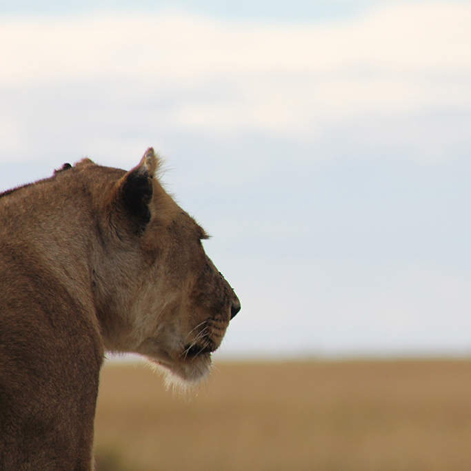 5.-4Selous-Game-Reserve-Africas-biggest-Game-Reserve